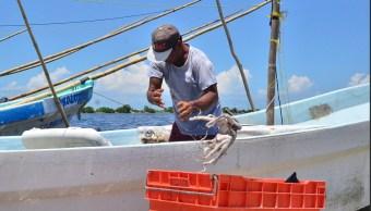 Decomisan más de una tonelada de pulpo en Campeche