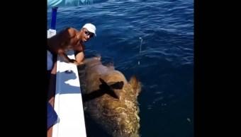 Peces Gigantes, Mero Gigante, Tiburones, Mero, Video, Tiburón