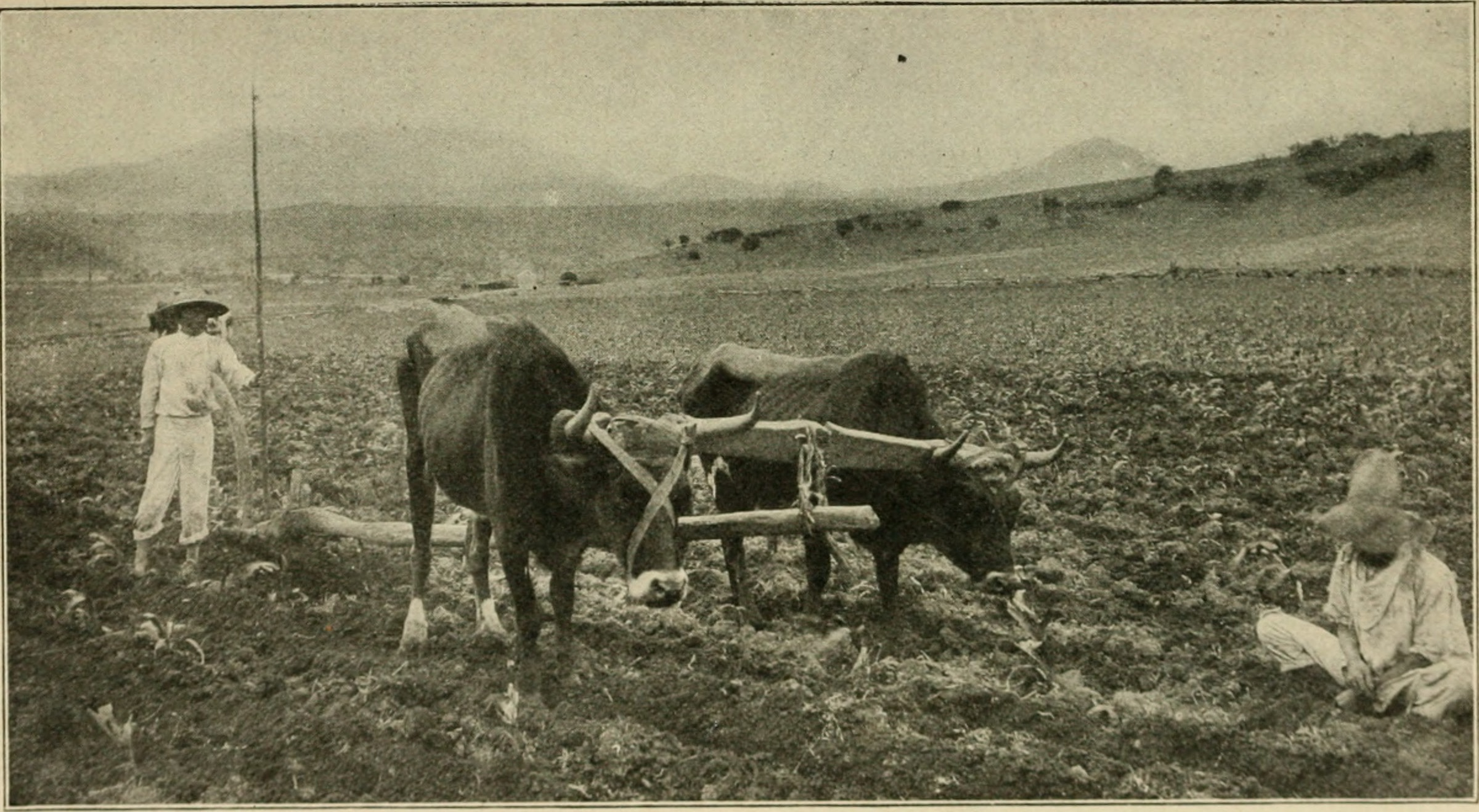 El Campo Mexicano durante Revolución Mexicana, 1910, Foto