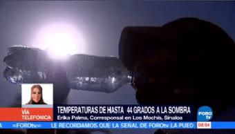 Registran Temperaturas Superiores 44 Grados Sinaloa