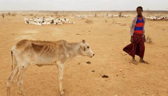 Sequía afecta a varios países del sur de África