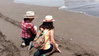Liberan a mil crías de tortugas golfinas en centro ecológico de Colima