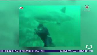 Tiburón blanco casi le arranca la cabeza a un buzo