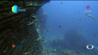 Por el Planeta: El pez Ángel Clarion