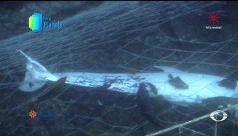 Por el Planeta: Restricción a la pesca en Revillagigedo