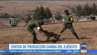 ¿Cómo entrena la policía militar a los perros?