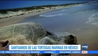 Santuarios que protegen a las tortugas marinas en México