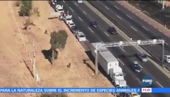 Tráiler impacta a ocho vehículos en la autopista México-Puebla