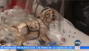 Continúa Desabasto Figura Perrita Frida Mercado Sonora