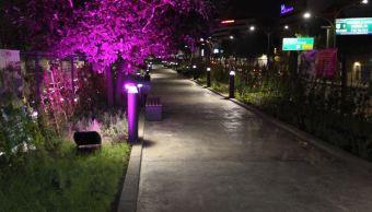 Ecoducto, un nuevo pulmón para la Ciudad de México