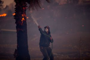 SUNLAND, CA - DECEMBER 05: A resident hoses a burning palm tree during the Creek Fire on December 5, 2017 in Sunland, California. Strong Santa Ana winds are rapidly pushing multiple wildfires across the region, expanding across tens of thousands of acres and destroying hundreds of homes and structures. (Photo by David McNew/Getty Images)