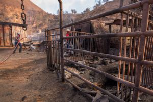 SYLMAR, CA - DECEMBER 06: Ranch hand Anthony Martin hoses down stalls where some of the 29 horses and numerous other animals had died in the Creek Fire at Rancho Padilla on December 6, 2017 near Sylmar, California. Strong Santa Ana winds are pushing multiple wildfires across the region, expanding across tens of thousands of acres and destroying hundreds of homes and structures. (Photo by David McNew/Getty Images)