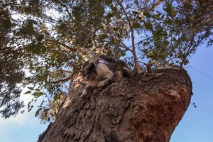 SYLMAR, CA - DECEMBER 06: A cat climbs down from an unburned tree where it had taken refuge near stalls where 29 horses and numerous other animals were killed in the Creek Fire at Rancho Padilla on December 6, 2017 near Sylmar, California. Strong Santa Ana winds are pushing multiple wildfires across the region, expanding across tens of thousands of acres and destroying hundreds of homes and structures. (Photo by David McNew/Getty Images)