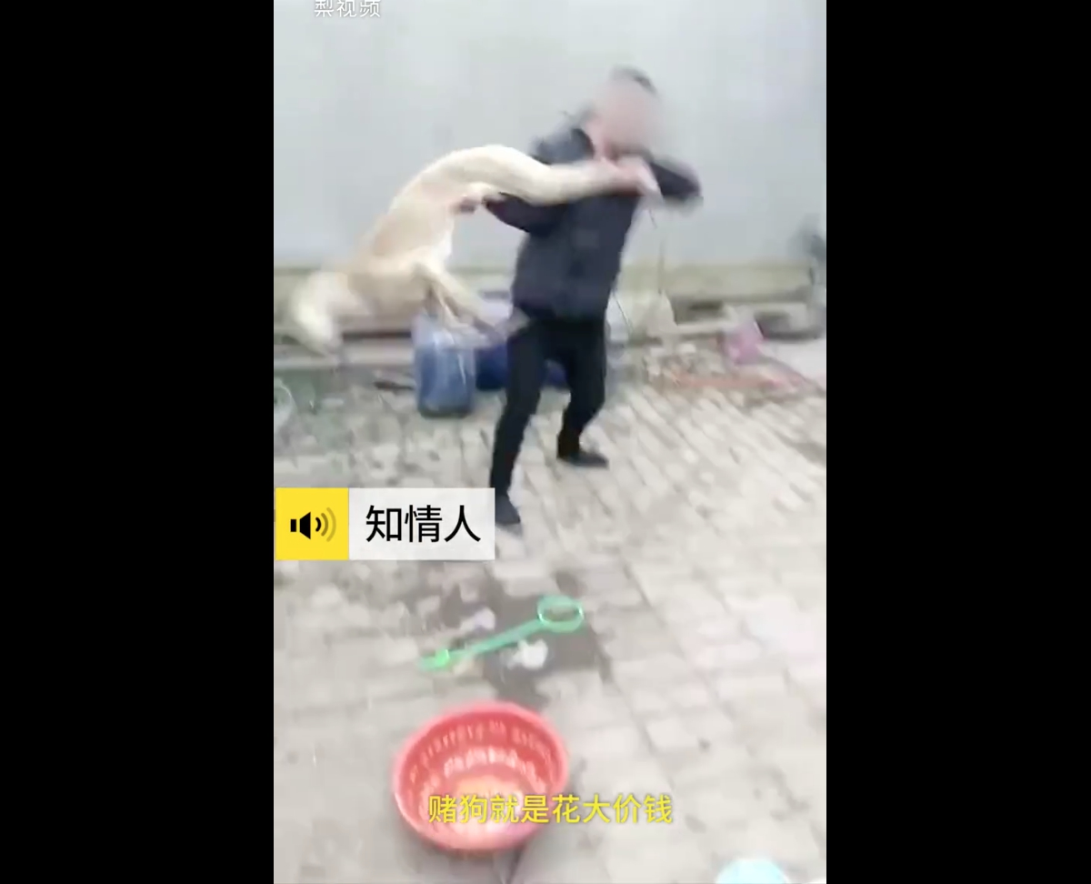 Hombre mata a su galgo a golpes por perder carrera