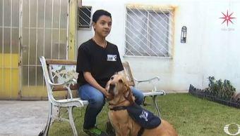 Perros salvan la vida a niños mexicanos que padecen diabetes