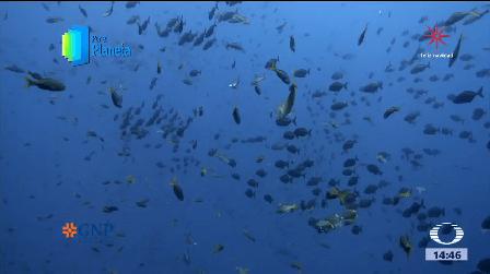 Pesca Ilegal Archipiélago Revillagigedo Buzos Ambientalistas