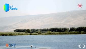 Oasis de Israel, humedales que albergan rutas migratorias para millones de aves