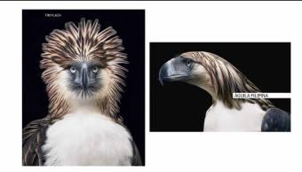 Fotógrafo presenta libro para concientizar sobre animales en peligro de extinción