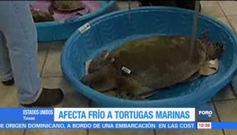 Tortugas marinas resultan afectadas por bajas temperaturas en EU