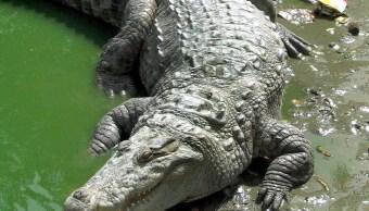 Buscan a niño atacado por cocodrilo en Oaxaca