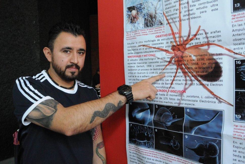 Descubren en Puebla nueva especie de la araña violinista. (UNAM)