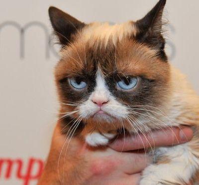 'Grumpy Cat' gana demanda a compañía de café