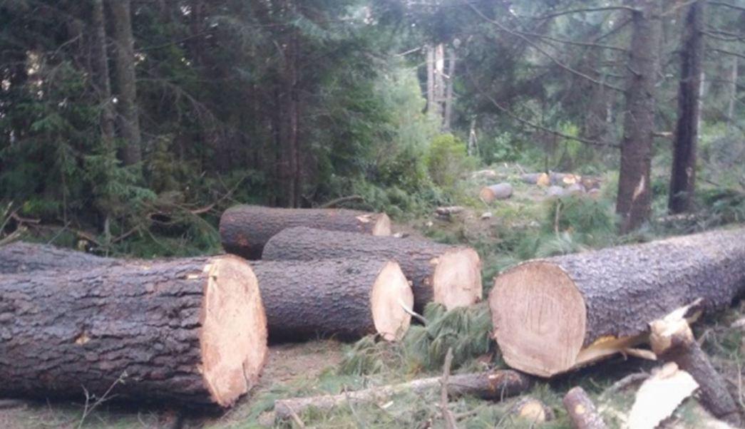 Aseguran Profepa madera de procedencia ilegal en Edomex y Michoacán