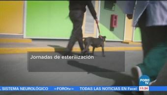 Realiza Jornadas Esterilización Perros Dueño