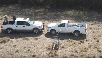 Reintegran a su hábitat a puma americano rescatado en Tamaulipas