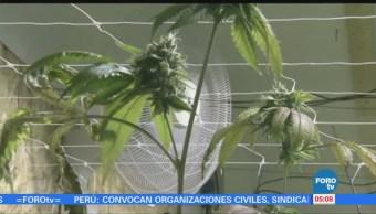 Incrementa Uso Marihuana México