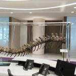 subastaran cola de dinosaurio para ayudar a escuelas