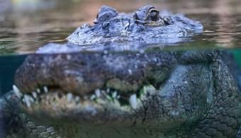 Pescador muere devorado por un cocodrilo en la isla filipina de Palawan