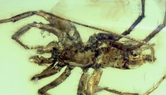 Araña-Prehistórica