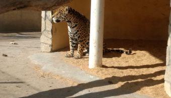 detras maltrato animal puede haber trasiego droga zoologico tamaulipas