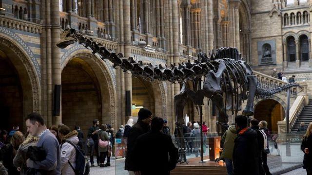 "Continúa gira del esqueleto del gran dinosaurio ""Dippy"" por museos de Londres"