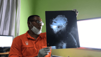 Asesinan a orangután en Indonesia; fue baleado y acuchillado