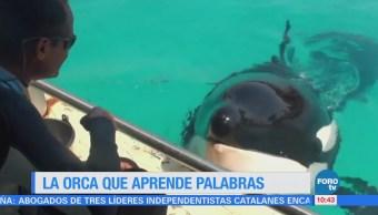 Extra Extra: Orca imita palabras humanas