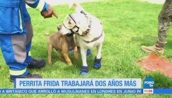 Extra Extra: Perrita 'Frida' trabajará dos años más