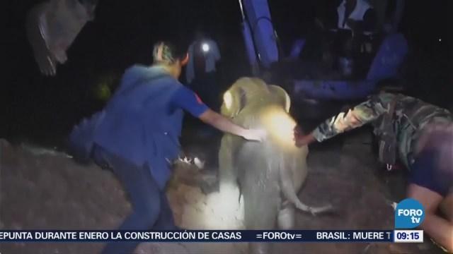 Extra Extra: Salvan a elefante atrapado en un pozo