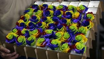 Rosas ecuatorianas seducen al mundo en el Día de San Valentín