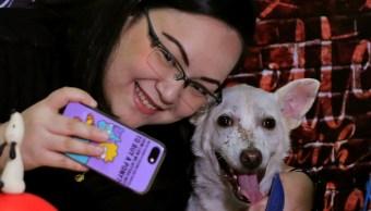 ONG ofrece citas de San Valentín con perros y gatos en Filipinas