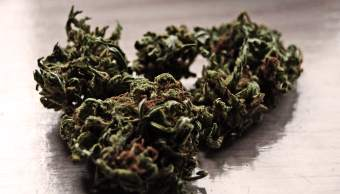 planta-marihuana-mota-mariguana-cannabis-oms