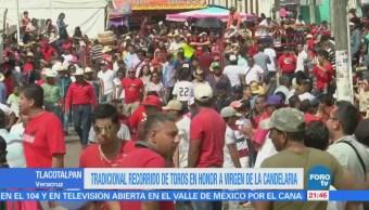 Realizan recorrido de toros en Tlacotalpan en honor a la Virgen de la Candelaria