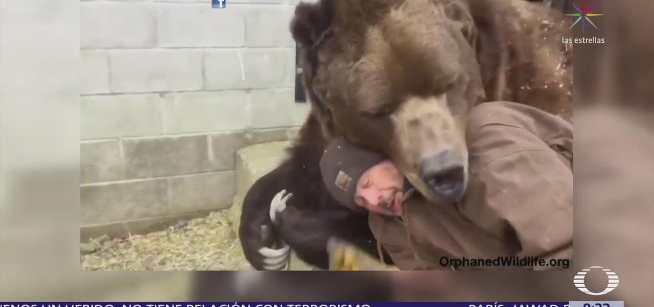 Un enorme oso se deja consentir