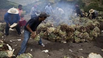 Renegociaciones del TLCAN preocupan a mezcaleros mexicanos