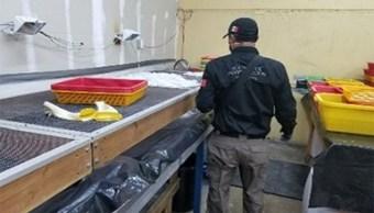 Asegura PGR en Baja California más de 740 kilos de metanfetamina