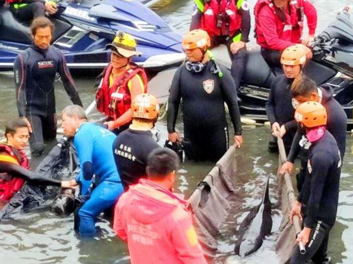 ballenas pigmeas mueren taiwan bolsas platico