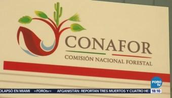 Conafor en alerta ante incendios forestales en Oaxaca