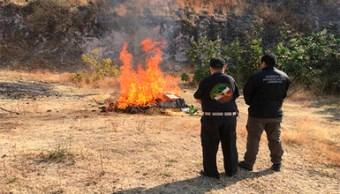 incineran drogas y pirateria en guanajuato