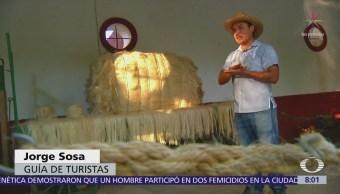 El henequén, planta que da identidad a la cultura maya